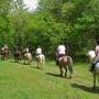 Offerta Passeggiata a Cavallo